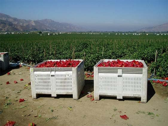 MacroBin 26 Pepper Harvest