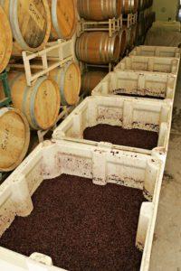 Aplicaciones - Cajones de procesamiento de alimentos con uvas rojas | MacroPlastics